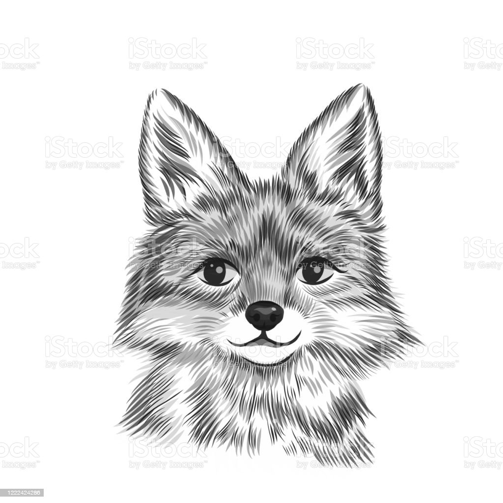 petit renard illustration de vecteur noir et blanc danimal dessin de croquis dessine a la main verticale de bete fond mignon de tete de renard vecteurs libres de droits et plus d images