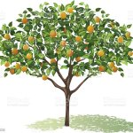Orange Tree Full Bloom With Leaves And Fruit Casting Shadow Stock Illustration Download Image Now Istock