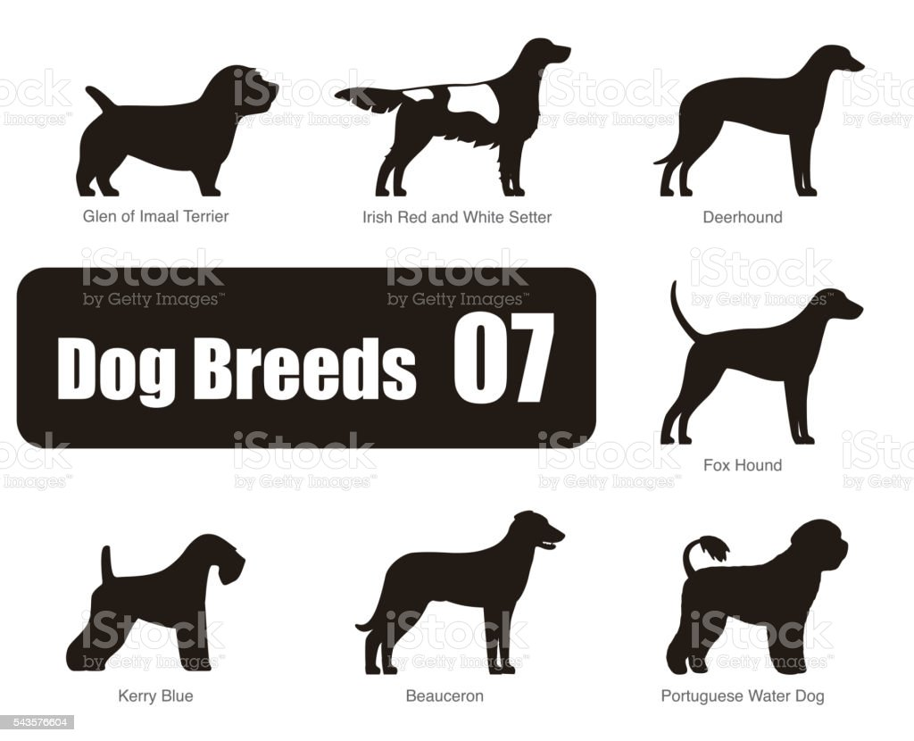 Royalty Free Foxhound Clip Art, Vector Images