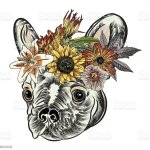 Small Cute French Bulldog Puppy Wearing Exotic Floral Wreath Tattoo Style Concept On White Background Friendly Doggy Portrait Vector Illustration Stock Illustration Download Image Now Istock