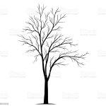 Vetores De Tree Silhouette Isolated On White Background Vector E Mais Imagens De Branco Istock