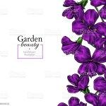 Violet Flower Drawing Vector Hand Drawn Floral Frame Viola Border Sketch Stock Illustration Download Image Now Istock