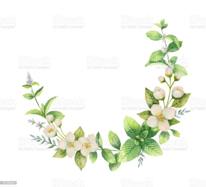 Royalty Free Jasmine Flower Clip Art  Vector Images   Illustrations     Watercolor vector wreath of flowers and branches Jasmine isolated on a  white background  vector art