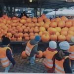 halloween jollen förskola handla pumpor