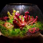 Carnivorous Plant Terrarium Unique Gifts Gardening Plants On Carousell