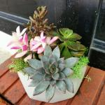 Elegant Succulent Arrangement In Geometric Pot Gardening Plants On Carousell