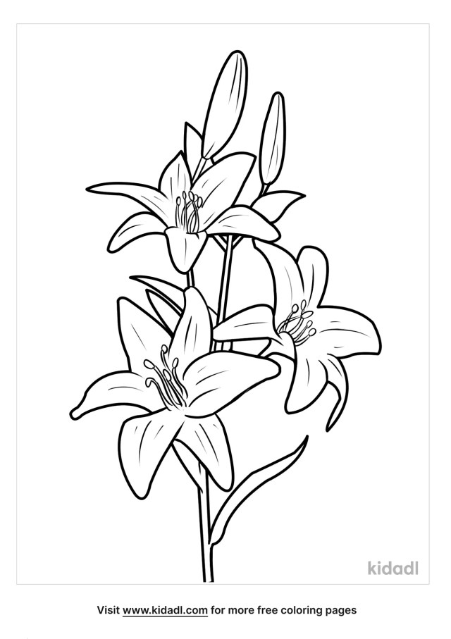 Lily Coloring Pages  Free Flowers Coloring Pages  Kidadl