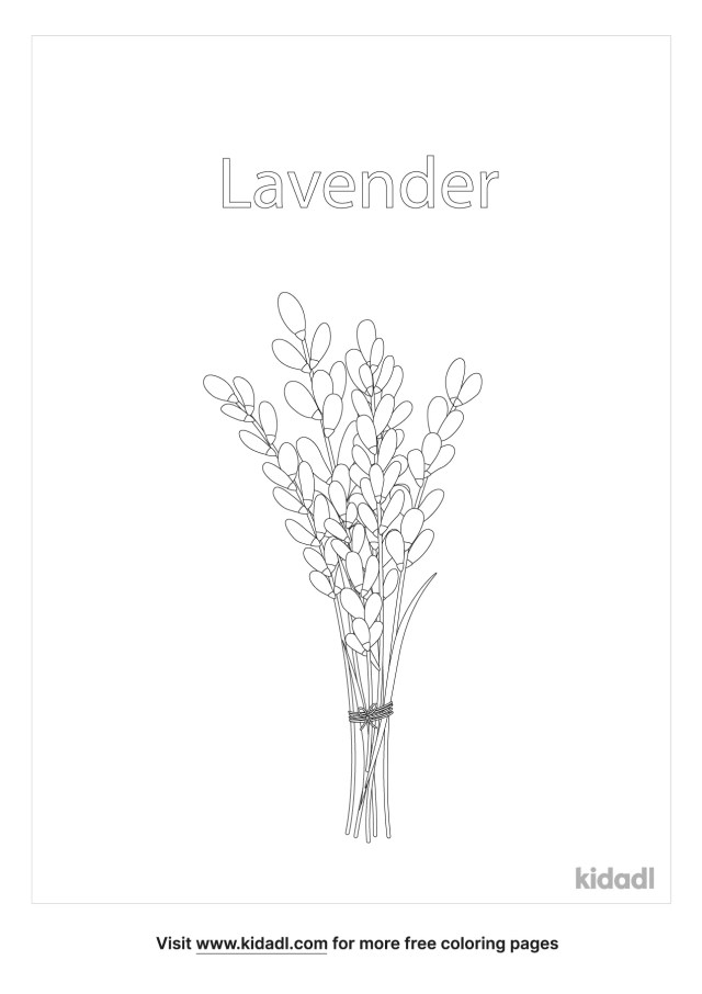 Lavender Coloring Pages  Free Flowers Coloring Pages  Kidadl