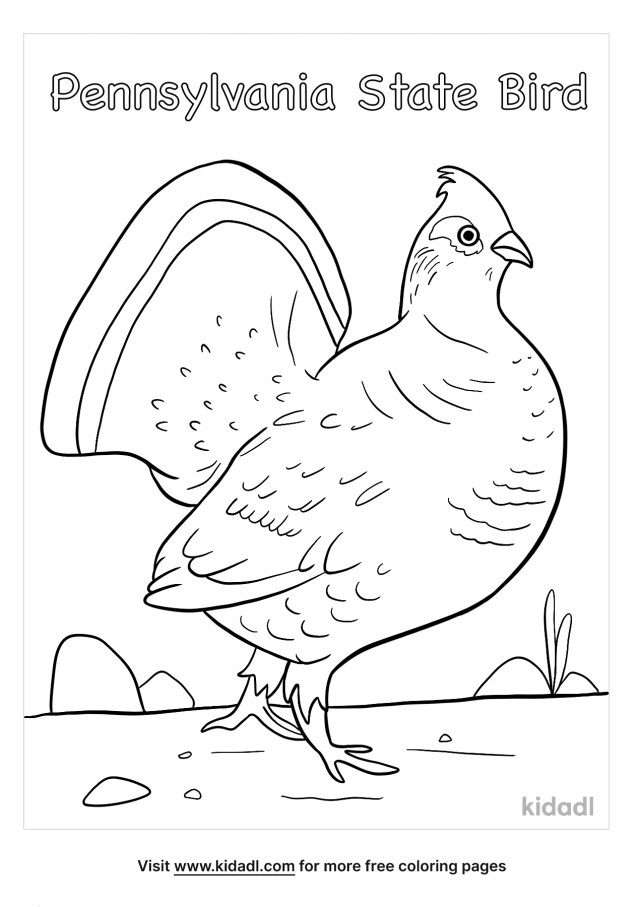 Pennsylvania State Bird Coloring Pages  Free Birds Coloring Pages