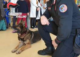 avellino carabinieri cc 112 cane pirat ospedale moscati pediatria