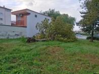 aversa area standard via garofano albero (3)