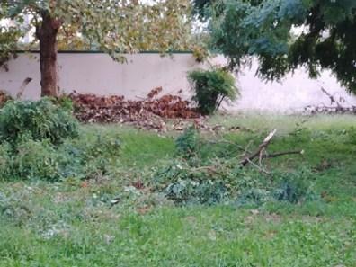 aversa area standard via garofano albero (4)