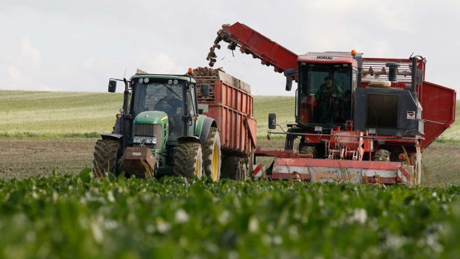 Le gouvernement veut permettre aux planteurs de betteraves à sucre d'employer, «dans des conditions strictement encadrées», un insecticide interdit depuis 2018 afin de protéger leurs cultures des pucerons verts, vecteurs du virus de la jaunisse.