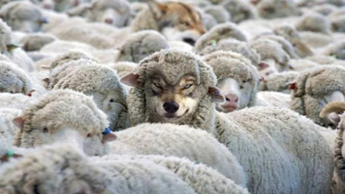 How To Detect A Wolf In Sheep S Clothing