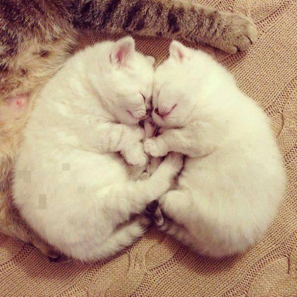 Very Lovely cats