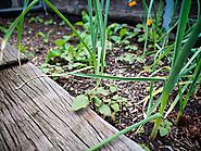 Garden Betty