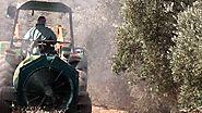 El escarabajo verde - Plagas de importación (2) , El escarabajo verde - RTVE.es A la Carta