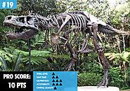 19. Dinosaur Activities