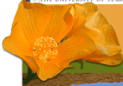Lady Bird Johnson Wildflower Center - The University of Texas at Austin