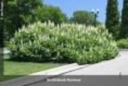 Ohioline: Yard and Garden: Trees, Shrubs & Groundcovers