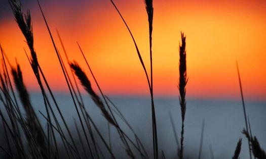 promenerar i solnedgången