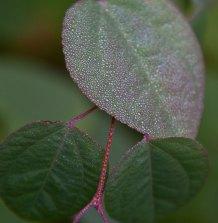 blad med droppar