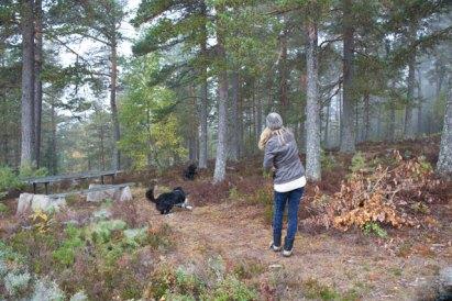 Syrran busar med hundarna i valberget
