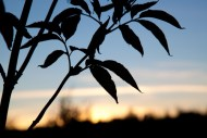 sommarstugan sexdrega solnedgång IMG_0929