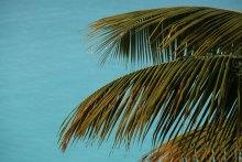 Palm, Antigua December 2013