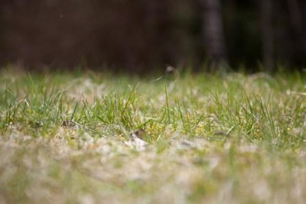 gräs IMG_5773