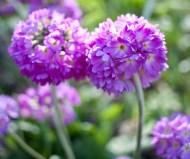 botaniska trädgården IMG_6917
