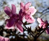 botaniska trädgården IMG_6929