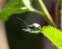 insekt IMG_7685