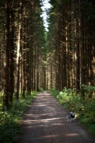 skogsväg IMG_3099