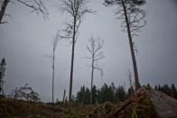 skogIMG_4106