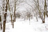 skog-snöIMG_5767