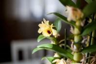 blomma-torsbyIMG_6426