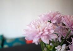 blomma-nya-lyanIMG_6602