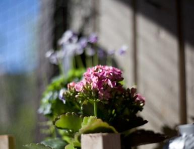 blommor-balkongIMG_6655