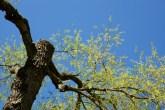 träd-slottsskogenIMG_6706