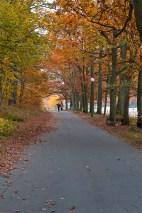 höst-slottsskogen2
