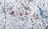 snö-träd