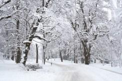 slottsskogen-snö-träd