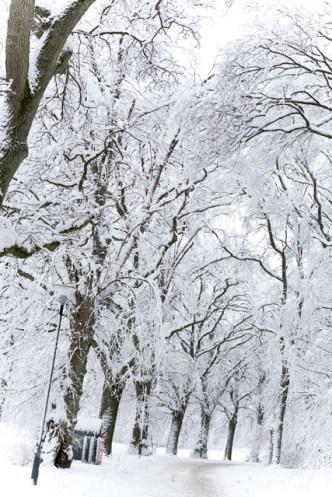 snö-slottsskogen