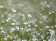 blomma-macro