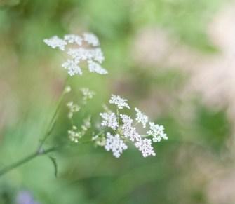 blomma-vit-macro