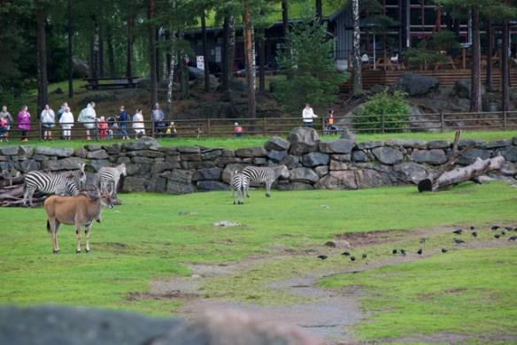 savann-zoo