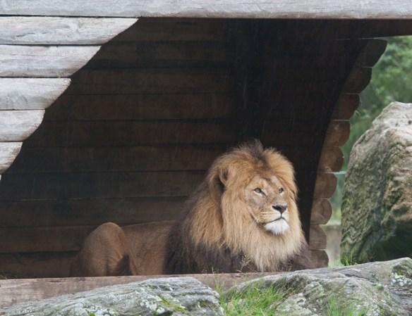 statligt-lejon