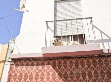 alvor-stad-hund-portugal