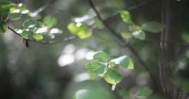 skog-träd